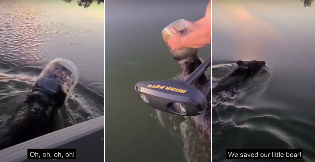 Young Bear Rescued From Plastic Container Stuck On Head While Swimming In Lake