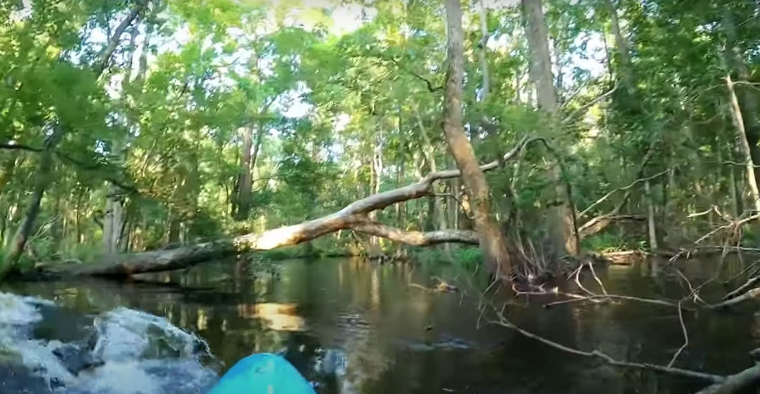See You Later!: Alligator Charges Kayaker, Overturns Him