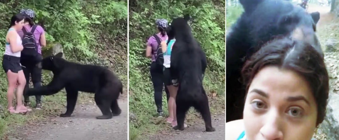 Yikes: Hikers Venture Across Bear, Bear Offers Hugs, Poses For Selfie