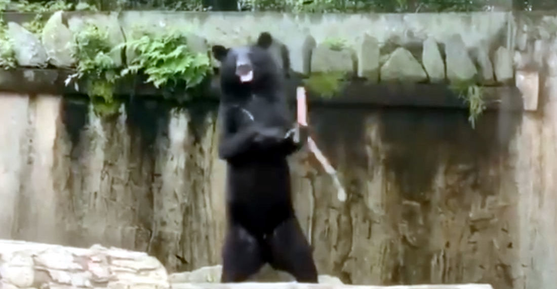 Oh, Internet: Bear Practicing With Nunchucks Set To Cypress Hill