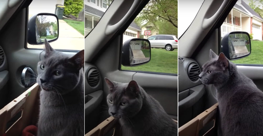 "Awww: Anxious Cat Repeats ""We're Going?"" In Car On Way To Vet"