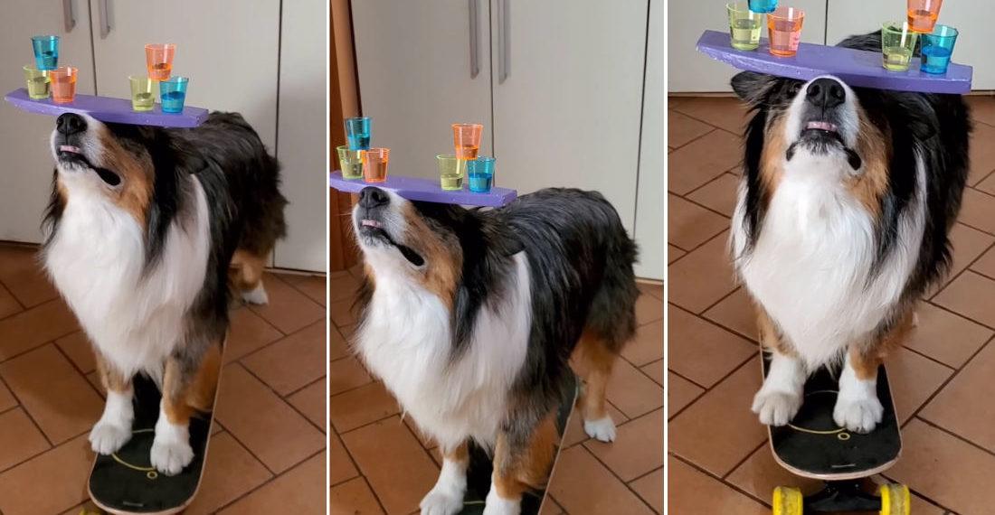 Dog Balances Shot Glass Pyramids On Head While Pushing Self On Skateboard
