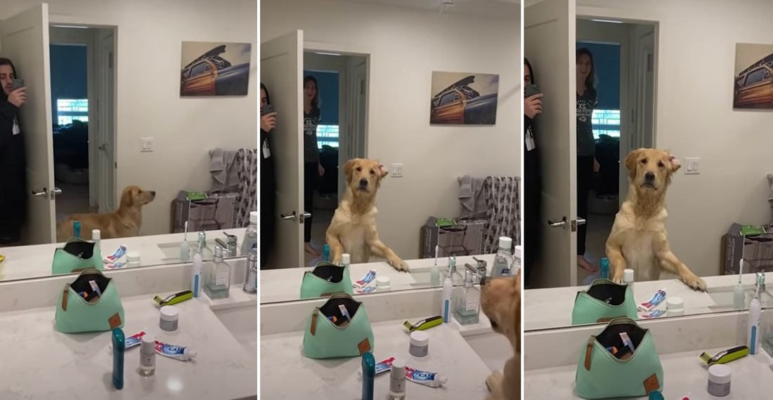 Dog Confused By Owner's Reflection In Mirror While Playing Hide And Seek