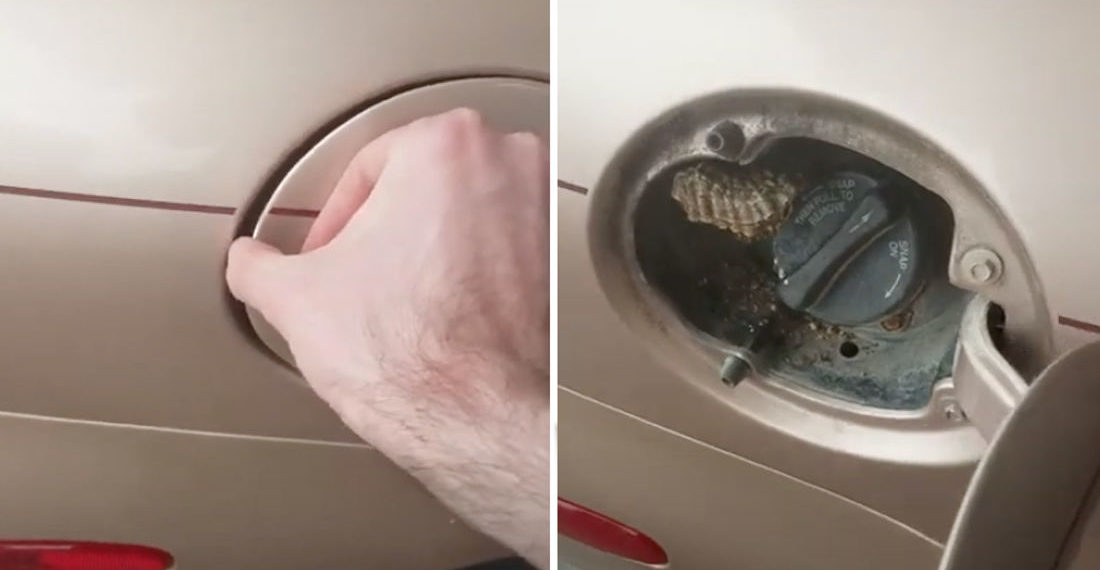 Surprise!: Guy Finds Hornet's Nest Behind Car's Gas Tank Door