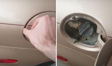Surprise!: Guy Finds Hornet's Nest Behind Car's Gas Tank Door