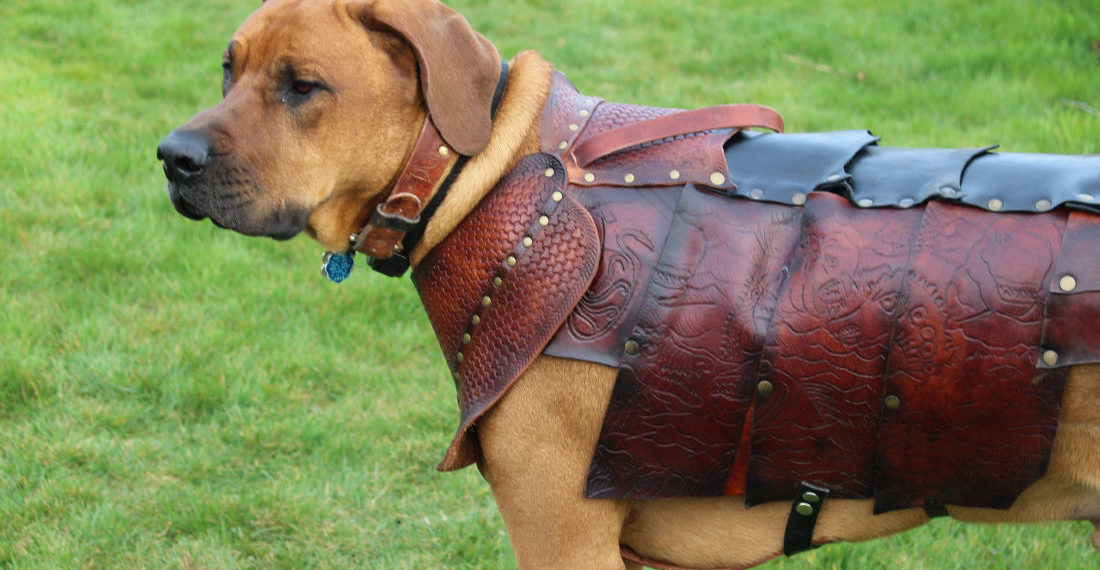Finally, Some Decent Custom Leather Armor For Your Pets