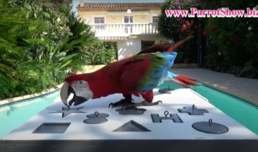 Parrot Quickly Solving Geometric Shape Puzzle