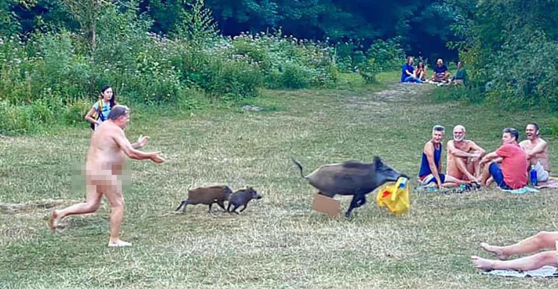 Naked Man Chases Wild Boar Who Stole His Laptop At German Lake