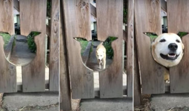 Awww: Dog Comes When Called To Stick Head Out Of Head-Shaped Hole In Fence