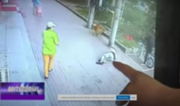 Cat Falls On Man While Walking Dog, Knocks Him Out Cold