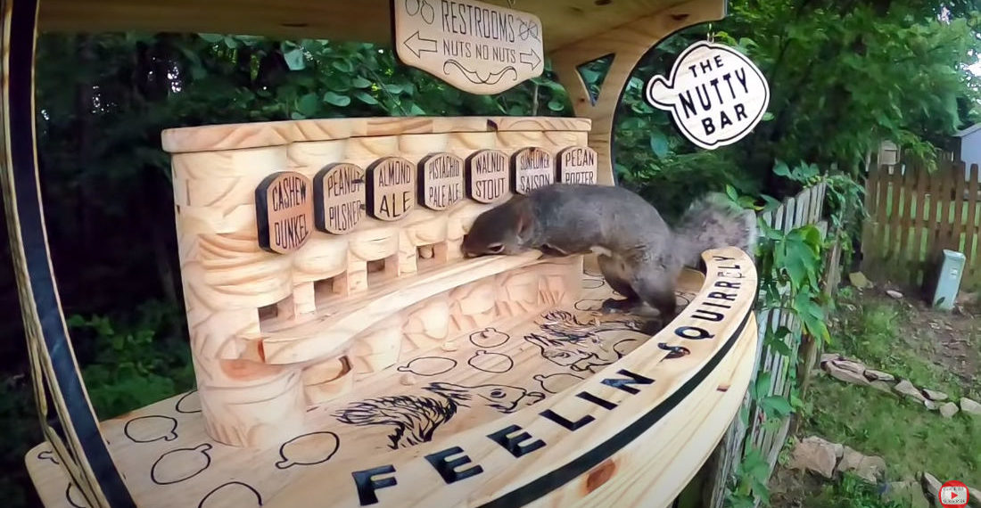 Man Builds Bar For Squirrels With Seven Different Types Of Nuts On Tap