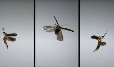Ultra Slow Motion Video Of Insects Spreading Their Wings And Taking Flight