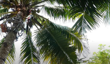 A Robotic Coconut Harvester Designed To Help Reduce Human Injury
