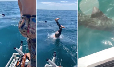 Poor Decision Maker Dives Into Ocean To See Basking Shark, It Isn't A Basking Shark