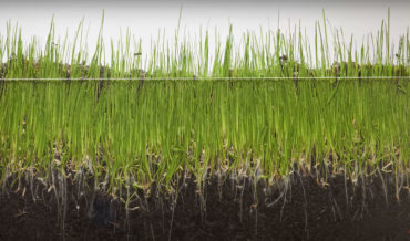 A Timelapse Of Grass Growing Over 8 Days, Made From 1,980 Individual Photos