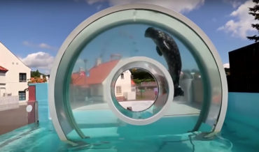 A Circular 'Above Water' Ring For A Seal To Swim Through