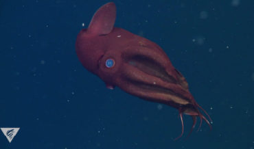 A 5-Minute Guided Meditation Based On The Movement Of A Deep Sea Vampire Squid