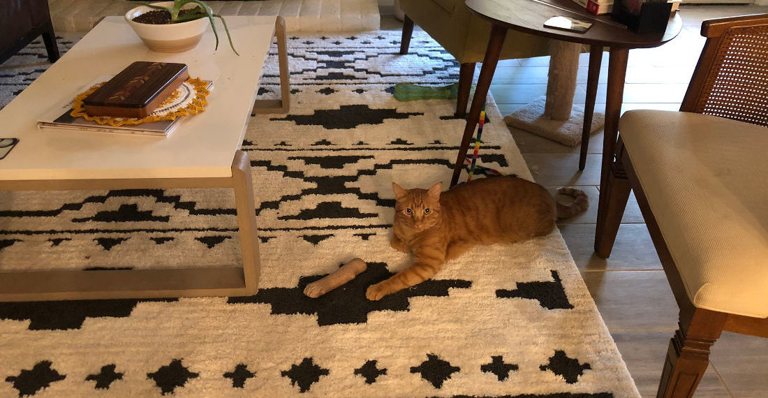 Not Bad: Photo Of Cat Performing Detachable Paw Illusion