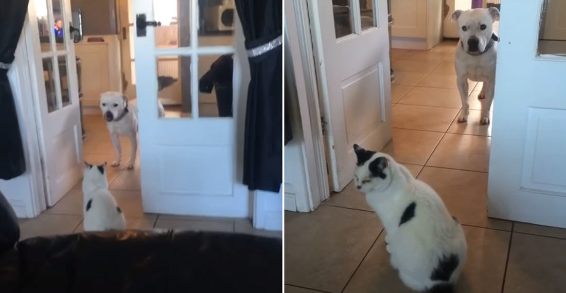 You Shall Not Pass: Cat Won't Let Dog By