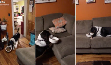 Smart Thinking: Dog Carries Food Bowl Onto Couch To Eat In Comfort