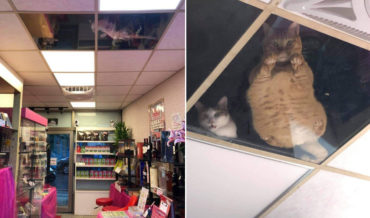 Shopkeeper Mods Ceiling With Glass Panels So Its Resident Cats Can Watch Shoppers