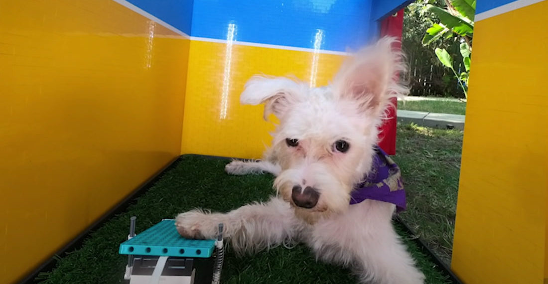 A Paw-Operated Photo Booth For Dogs Built Out Of LEGO