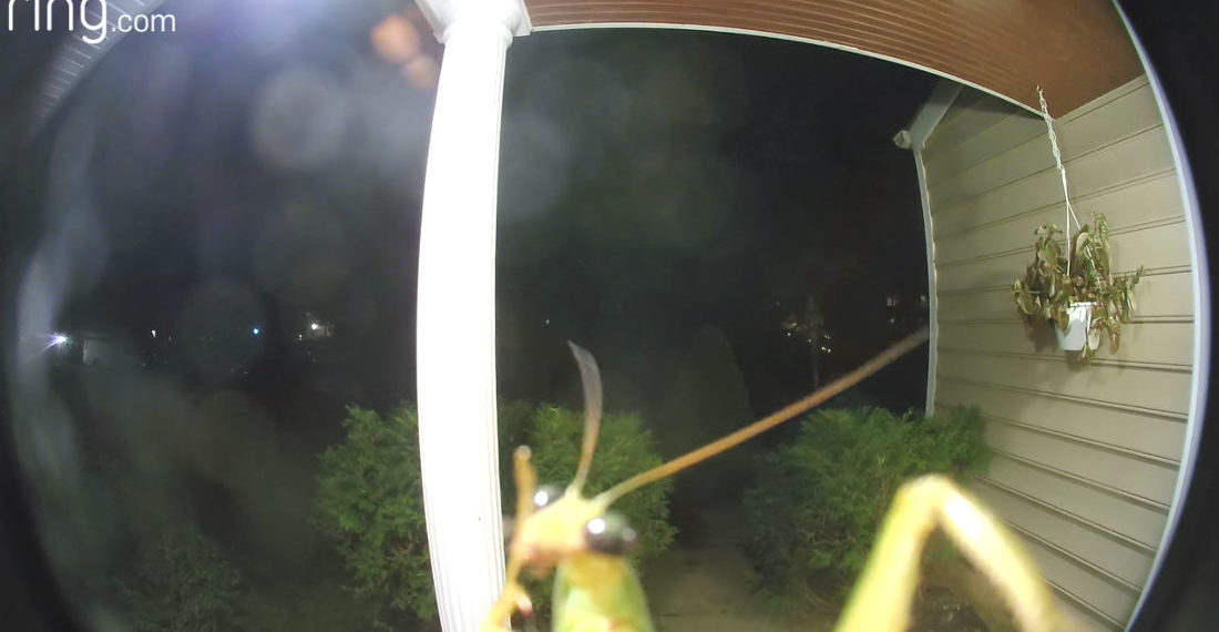 I'm With The Church: Praying Mantis Triggers Ring Doorbell Cam