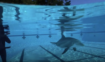 Ultra-Realistic Robotic Dolphin Developed To Replace The Real Ones In Captivity