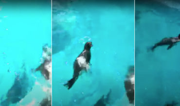 Sea Lion Yells Like Tom Hanks In Castaway