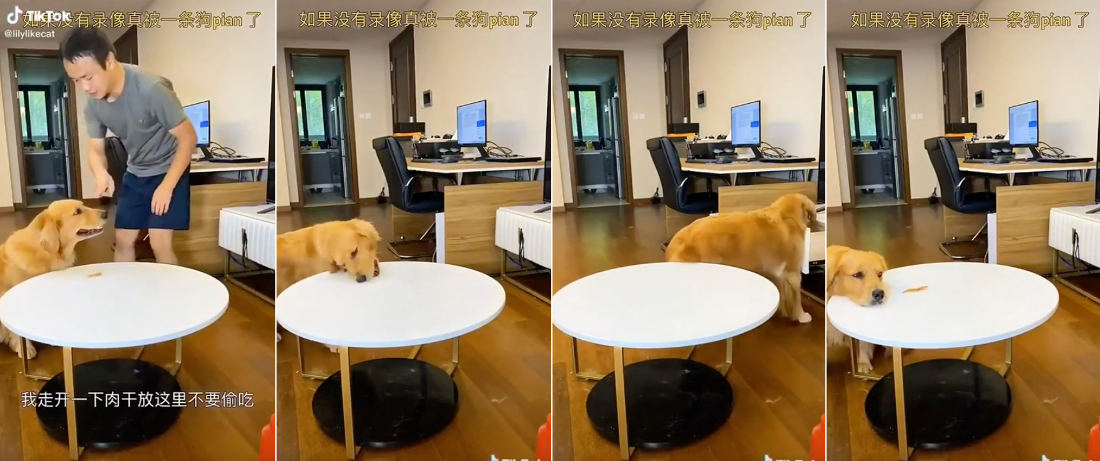 Dog Performs Clever 'I Didn't Already Eat My Treat' Trick