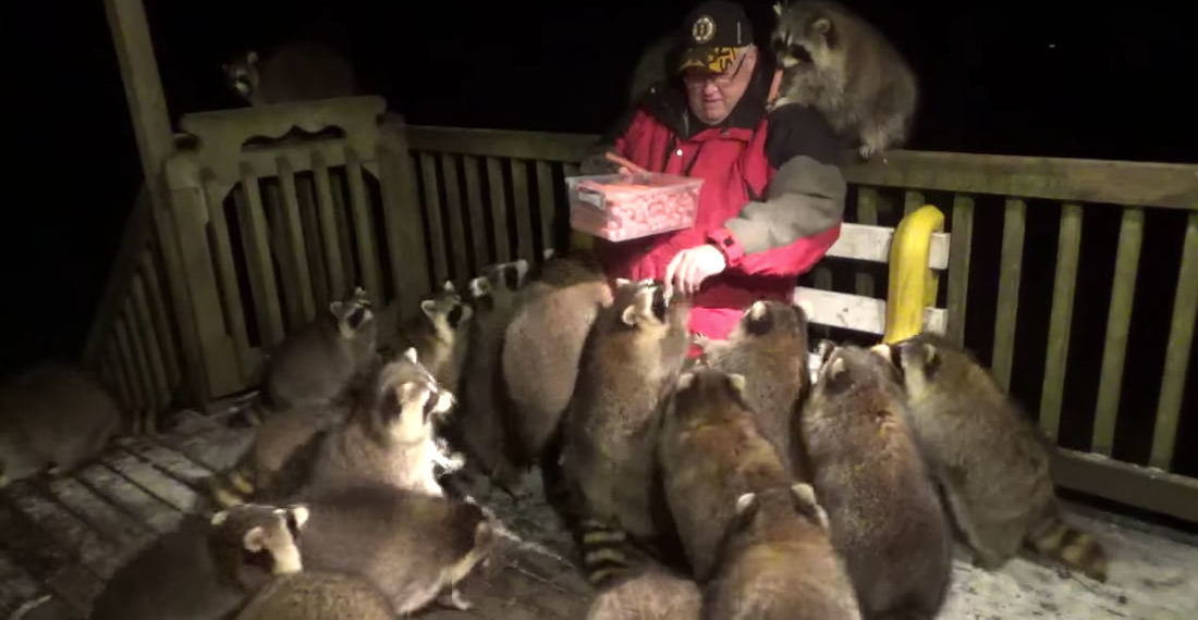 Future Me: Man Passing Out Hot Dogs To The 25 Raccoons On His Back Porch