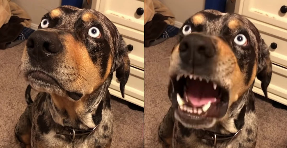 Dog Disagrees With Story His Dad Is Telling About Him