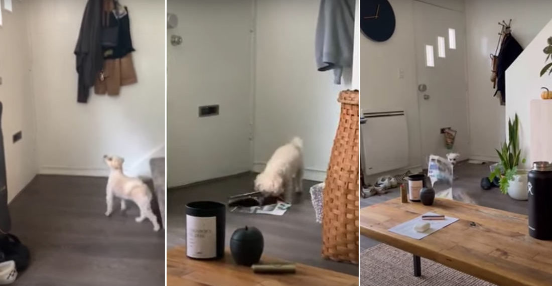 My Goodness!: Little Dog Destroys Everything That Comes Through Mail Slot