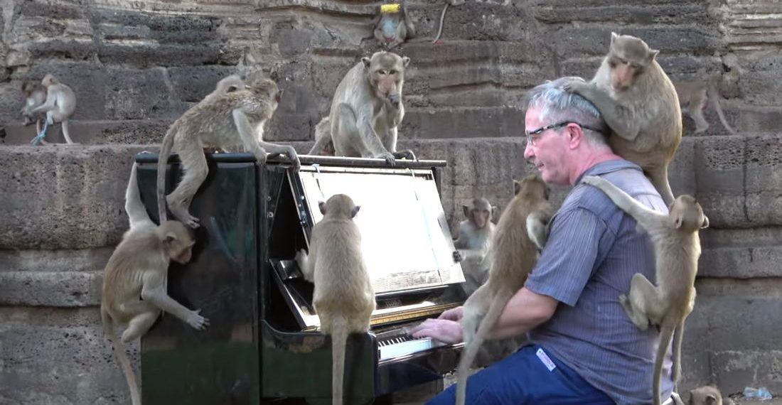 Pianist Performs For Group Of Monkeys As They Crawl All Over Him