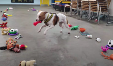 Awww: Adoptable Shelter Dogs Pick Out Their Own Christmas Gifts