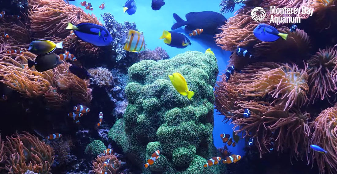 12 Hours Of Tropical Coral Reef Aquarium Fishes