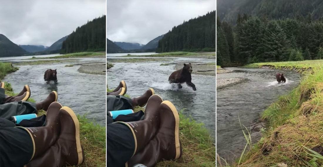Hikers Casually Encounter Charging Brown Bear By Alaskan River