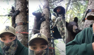 Well Hello There!: Bear Chases Another Bear Into Tree With Two Hunters In Stand