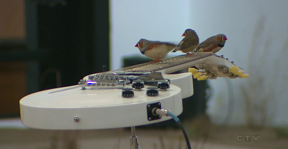 Free Bird!: Room Full Of Birds Play Electric Guitars As They Perch On The Strings