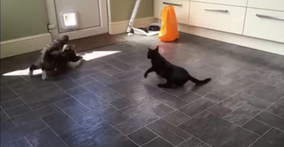 Slow Motion Footage Of Two Cats Drifting Towards The Pet Door In A Kitchen