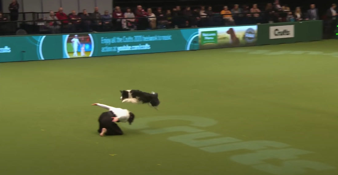 Dog Dances To Evanescence's 'Bring Me To Life' During Dog Show