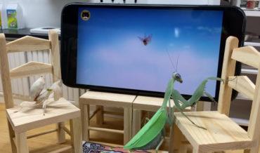 Praying Mantises In Miniature Living Room Watching TV