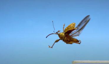 Awkward Bugs Taking Flight In Ultra Slow-Motion