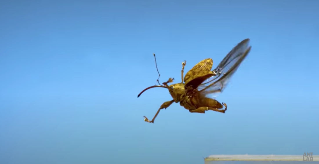 Awkward Bugs Taking Flight In Ultra Slow-Motion