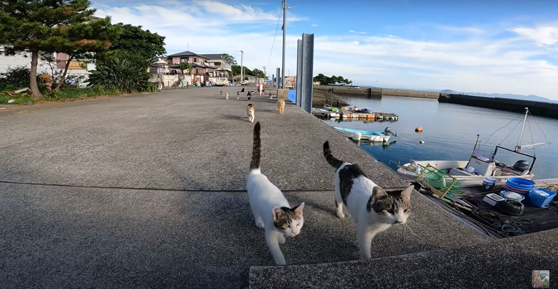 Man Visits Japan's 'Cat Island', Is Immediately Greeted By Its Inhabitants
