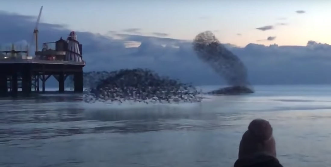 Whoa: Bird Murmurations Over Water Don't Even Look Real