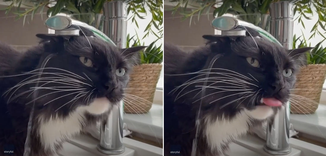 Nailed It: Cat Fails Miserably At Drinking From Kitchen Faucet