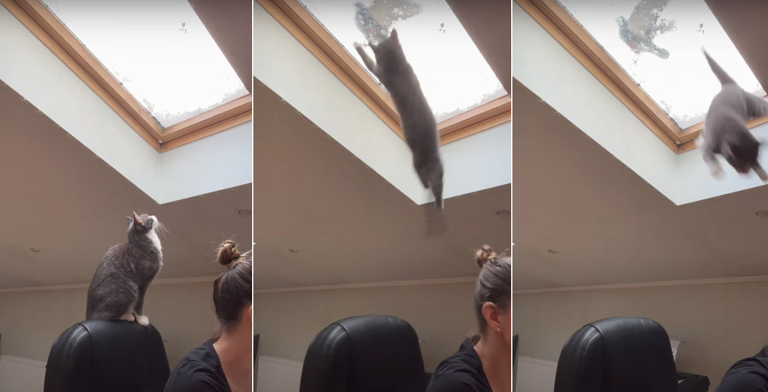 Access Denied: Cat's Attempt To Grab Pigeon Foiled By Skylight