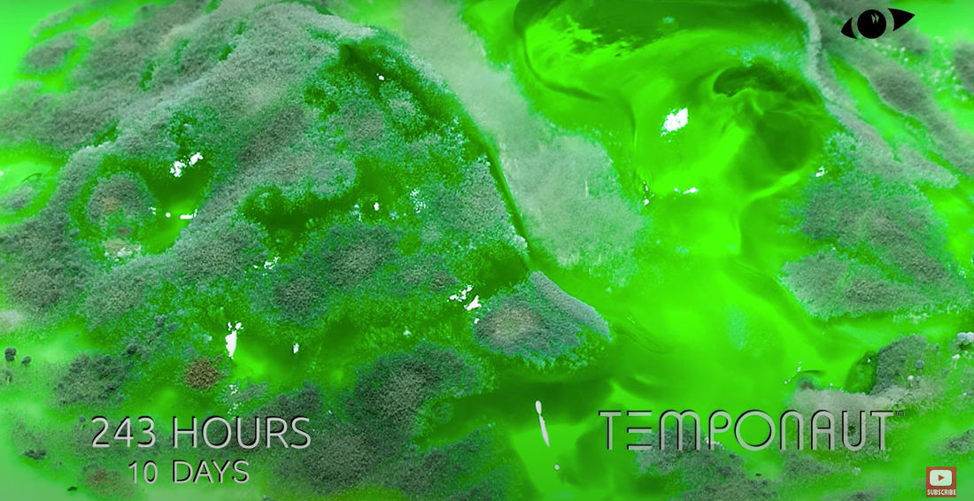 Yum: A Timelapse Of Mold Growing On Jell-O Over The Course Of 25 Days