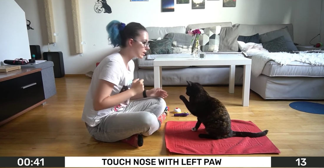 Guinness World Record Video Of Most Cat Tricks Performed In One Minute, With 26
